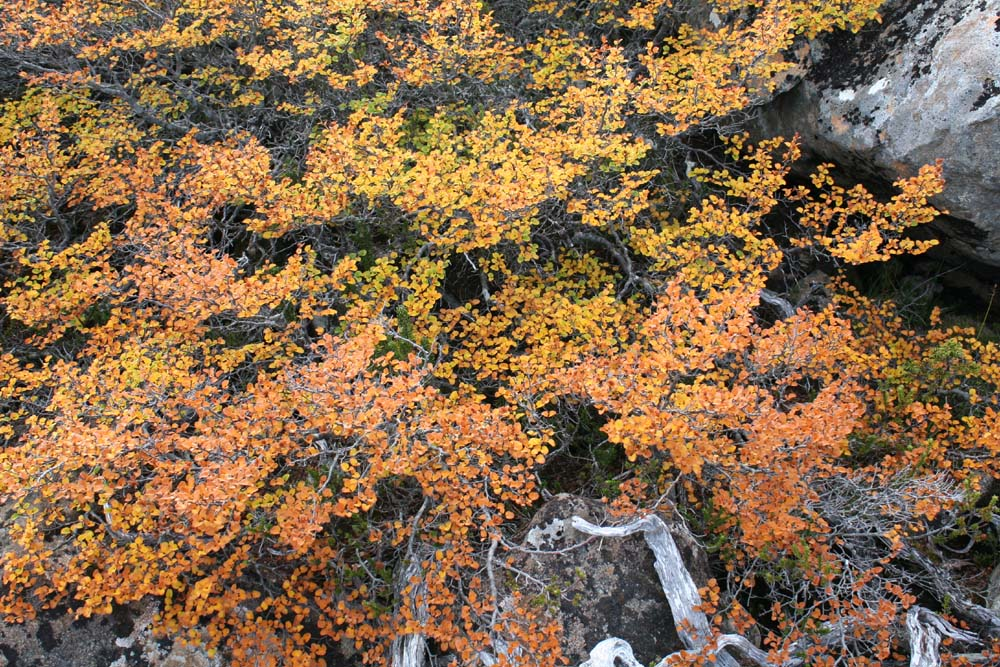 FAGUS - The Day Is Coming