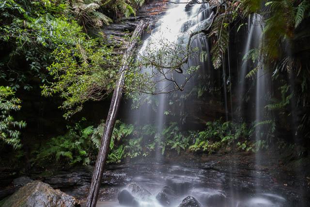 Lawson Waterfall Walk 7 January 2016 David Noble Blog