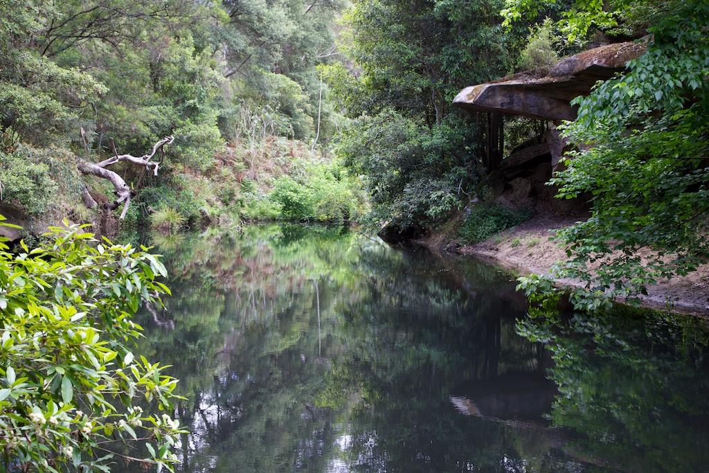 Gnwthornleightohornsby for Fish ponds sydney